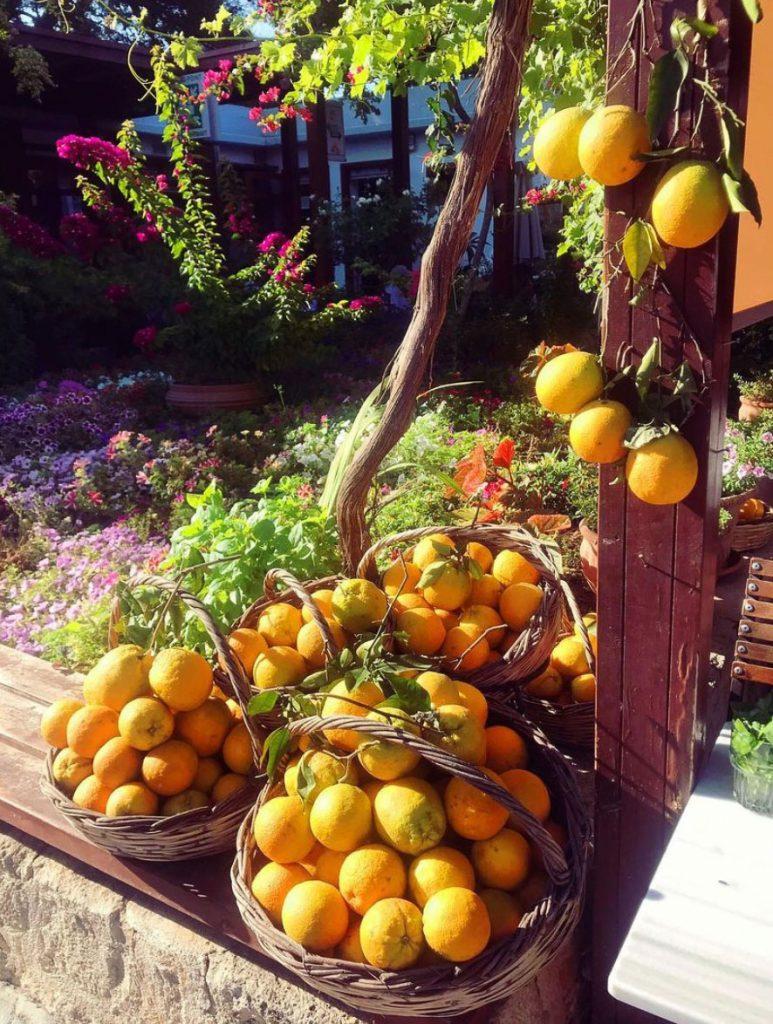 oranges fraiches