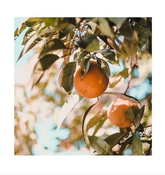 une orange dans l'arbre