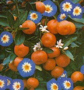 article de blog La petite Orange sur le role de l'orange dans la cosmétique