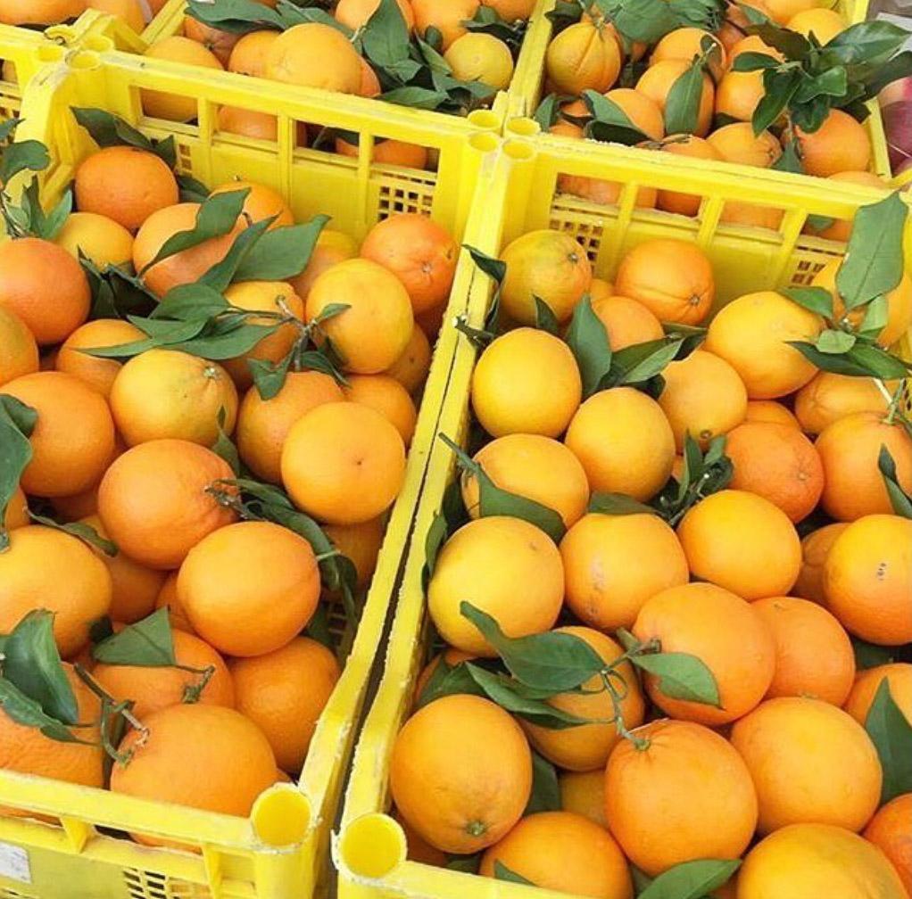 oranges dans caisse en plastique